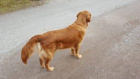 Hund auf dem Weg Stockfoto