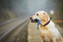 Hund auf der Bahnplattform Stockfotos