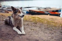 Hund auf der Bank des Sees Lizenzfreies Stockfoto