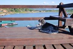 Hund auf der Brücke über dem Fluss Stockbilder