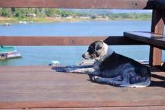 Hund auf der Brücke über dem Fluss Lizenzfreie Stockfotografie