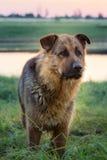 Hund auf der Flussbank Lizenzfreie Stockfotos