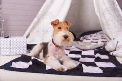 Hund auf der Matte nahe bei einem Geschenk Stockfotografie