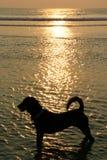Hund auf der Sonne Lizenzfreie Stockbilder