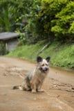 Hund auf der Straße Lizenzfreies Stockbild