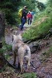 Hund auf der Trekkingsspur stockfotos