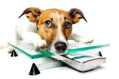 Hund auf digitaler Skala Lizenzfreies Stockbild
