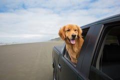 Hund auf einem Antrieb Lizenzfreies Stockbild