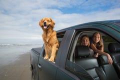 Hund auf einem Antrieb Stockbild