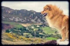 Hund auf einem Ausblick Stockfotografie