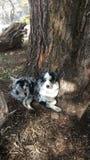 Hund auf einem Baum Lizenzfreies Stockfoto