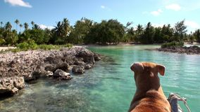 Hund auf einem Boot im Ozean stock video footage