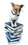 Hund auf einem Buchstapel lizenzfreie stockbilder