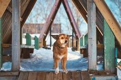 Hund auf einem children& x27; s-Hügel Stockfotografie