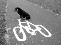 Hund auf einem Fahrrad Stockfoto