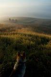 Hund auf einem Gebiet Schöner Sonnenaufgang Stockfotos