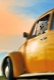 Hund auf einem gelben Auto Lizenzfreie Stockbilder
