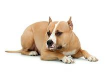 Hund auf einem getrennten Hintergrund Lizenzfreie Stockfotos