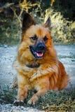 Hund auf einem Gras Lizenzfreies Stockfoto