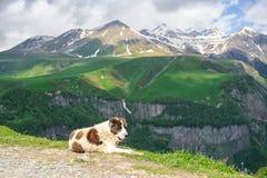Hund auf einem Hintergrund von Bergen Stockbild