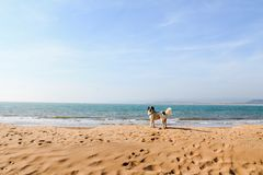 Hund auf einem leeren Strand Stockbilder