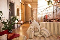Hund auf einem Sofa Lizenzfreie Stockfotografie