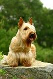Hund auf einem Stein Lizenzfreie Stockbilder