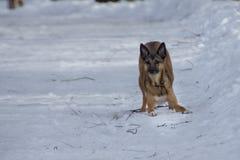 Hund auf einem Weg in einem Winterpark stockbild