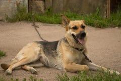 Hund auf einer Kette Lizenzfreie Stockfotografie