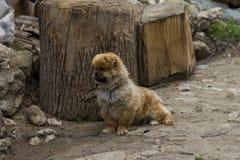 Hund auf einer Kette Lizenzfreie Stockbilder