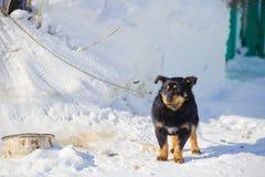 Hund auf einer Leine Stockfoto