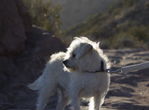 Hund auf einer Leine Lizenzfreies Stockfoto