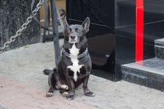 Hund auf einer Leine erwartet den Eigentümer am Geschäft stockfotografie