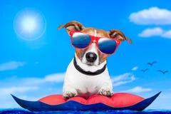 Hund auf einer Luftmatraze Stockfotos