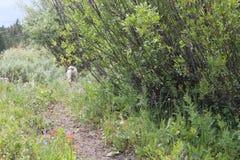 Hund auf einer Wanderung in Idaho Lizenzfreie Stockfotos