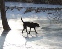 Hund auf Eis Stockbilder