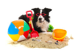 Hund auf Ferien Stockfotos