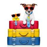 Hund auf Ferien Stockbild