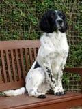 Hund auf Garten-Bank Lizenzfreies Stockfoto