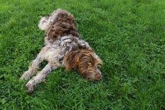 Hund auf Gras Stockbilder