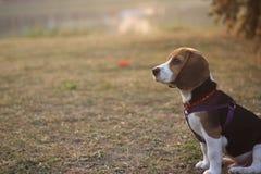 Hund auf Gras Stockfotos