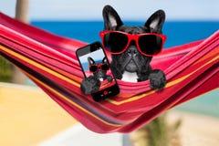 Hund auf Hängematte im Sommer lizenzfreie stockbilder