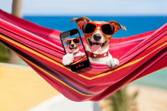 Hund auf Hängematte selfie Stockfotografie
