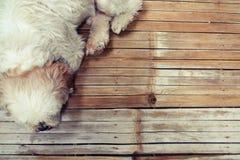 Hund auf hölzernem Boden Stockfotos