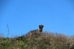 Hund auf Hügel Lizenzfreie Stockbilder