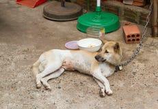 Hund auf Kette mit Verschluss, Verhinderung vom Diebstahl für Verbrauch stockbilder