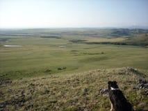 Hund auf Lager, der das Grasland überblickt Stockfotografie
