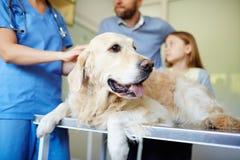 Hund auf medizinischer Tabelle Lizenzfreie Stockfotografie
