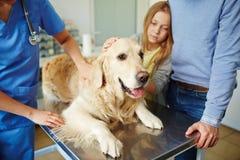 Hund auf medizinischer Tabelle Lizenzfreie Stockbilder