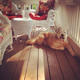 Hund auf Portal Stockfotos